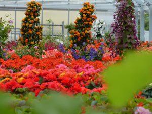 Pflanzenvielfalt bei Zeller, der Gärtnerei in Ehingen